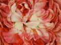 Roos Reine des violettes