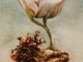 Aardappel tulp