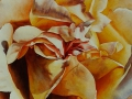roos Polka 2