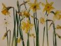 Gele en witte narcissen