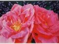 Roos Mullard Jubilee
