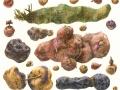 Aardappel Wild en Tam