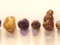 Aardappels op een rijtje