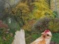 Serama in onze herfst tuin