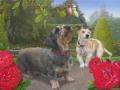 Twee honden in een rosarium