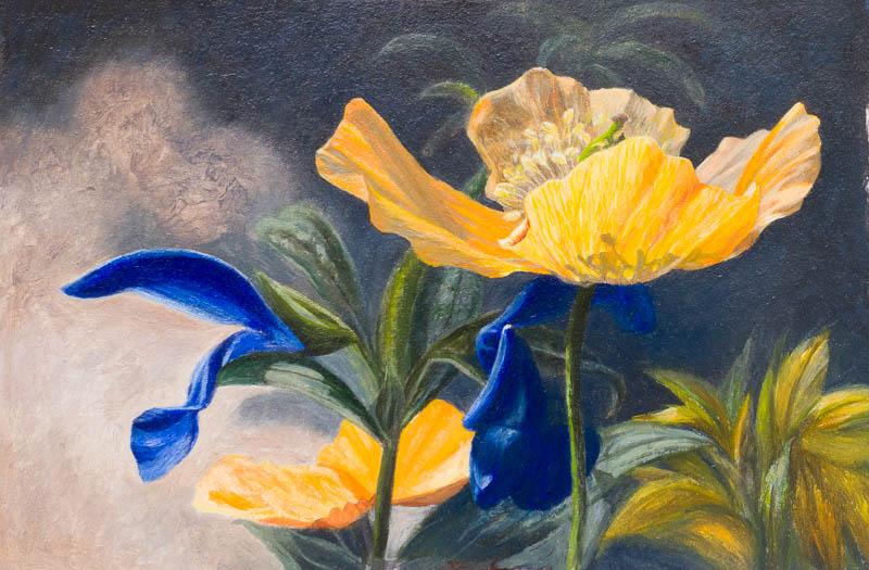 Oranje blauw