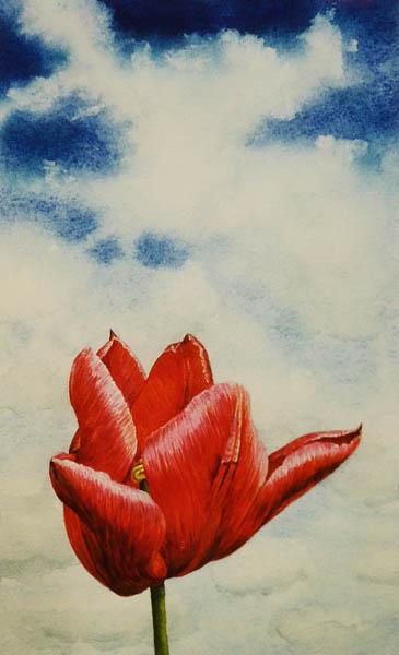 Een tulp