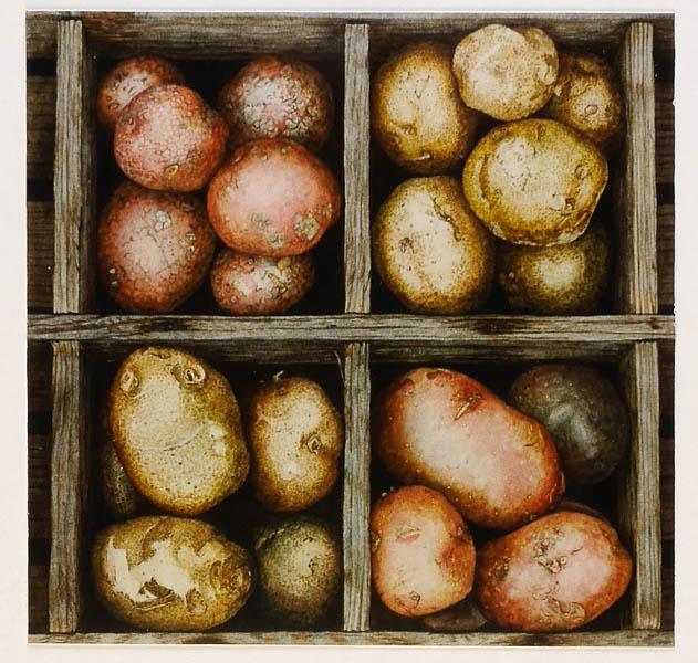 Aardappelkist, droog