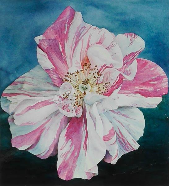 Roos Rosa Mundi Versiclor
