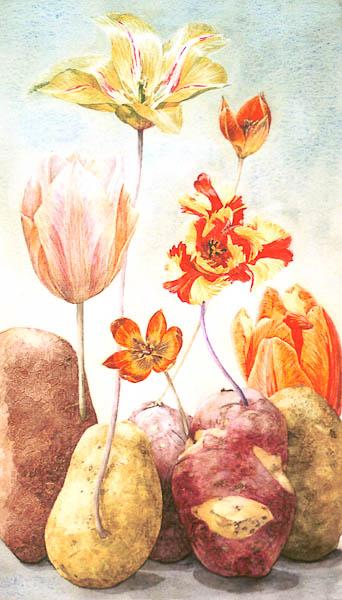 Aardappel tulpen