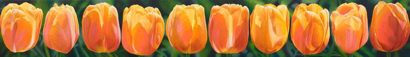 Doorzon Tulpen