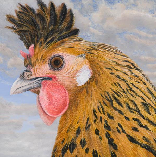 Kip: Appenzeller spitskuif (goud-vrouw-jong)