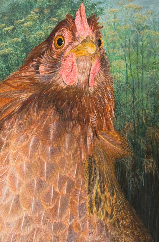 Welsumer kip, rood patrijs