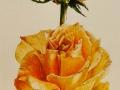 Roos Oranje groot