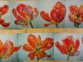 10 meter tulpen