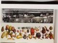 Aardappel kweekbedrijf