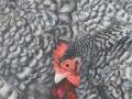 Noord-Hollandse kriel (koekkoek kleur)
