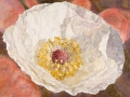 Papaver Rhoeas, wit