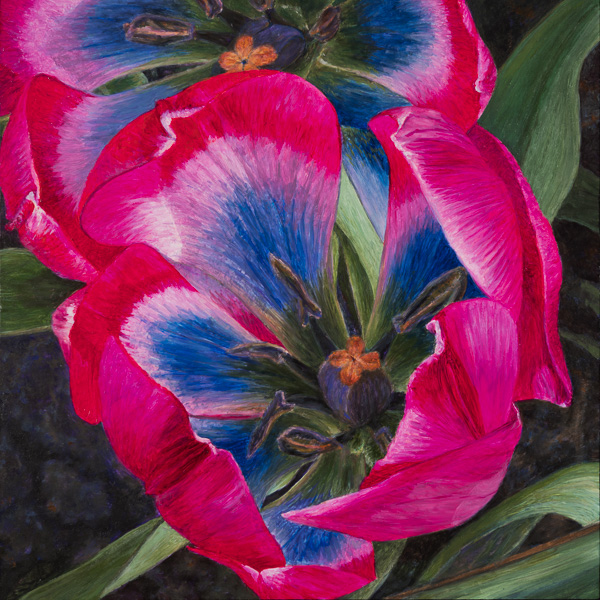 Botanische Tulp 'Little Beauty'