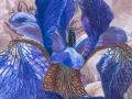 Paarse Iris