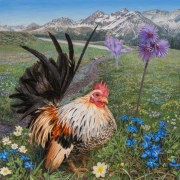 Haan in Zwitserse Alpenweide